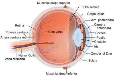 Structura Ochiului