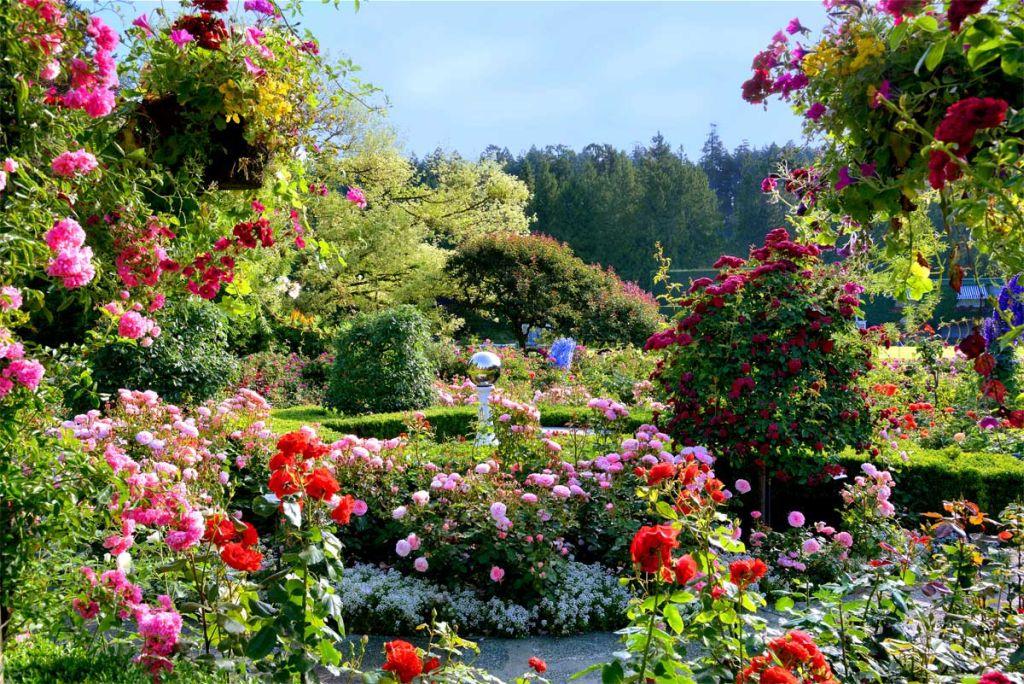 Gradini cu flori